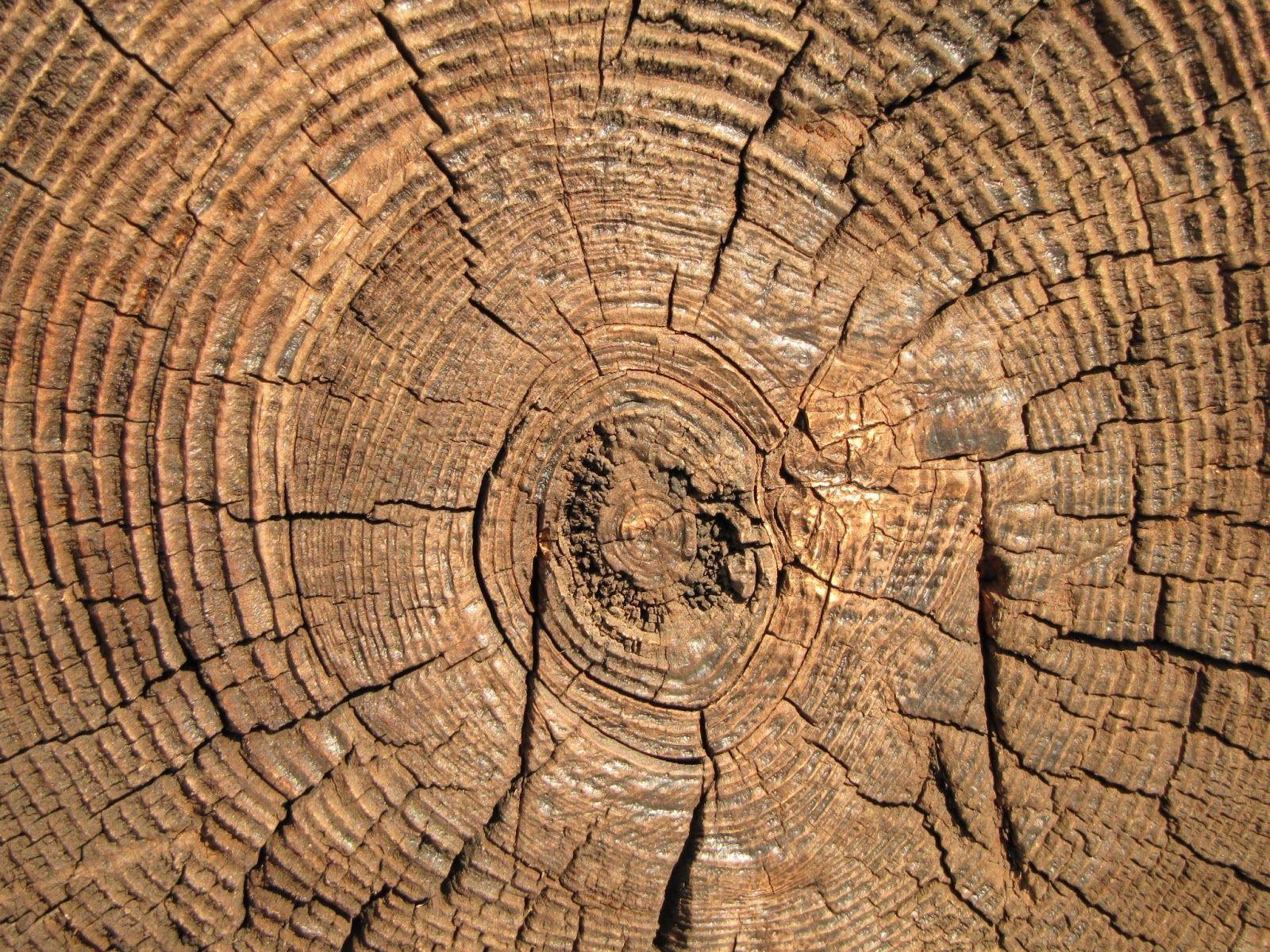 Буковая древесина
