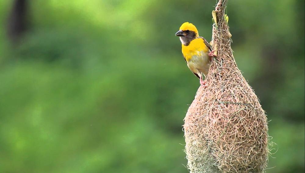 Офис продаж в виде гнезда