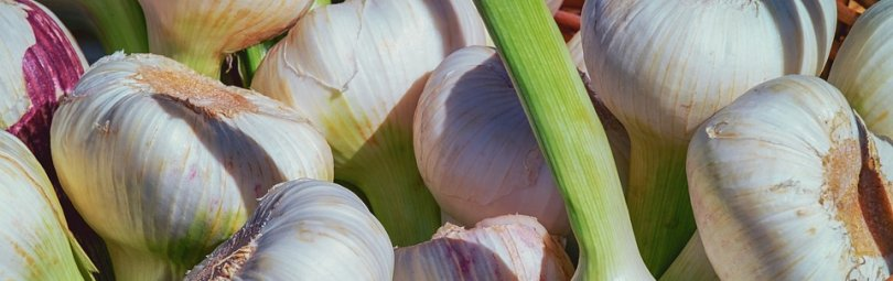 garlic-3471701_960_720_crm