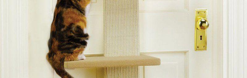 кот взбирается по лестнице