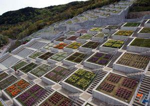 Ступени в японском саде мечты