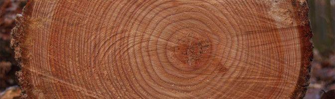 Характерные особенности лестниц из лиственничной древесины