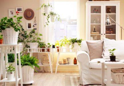 живые растения в комнате